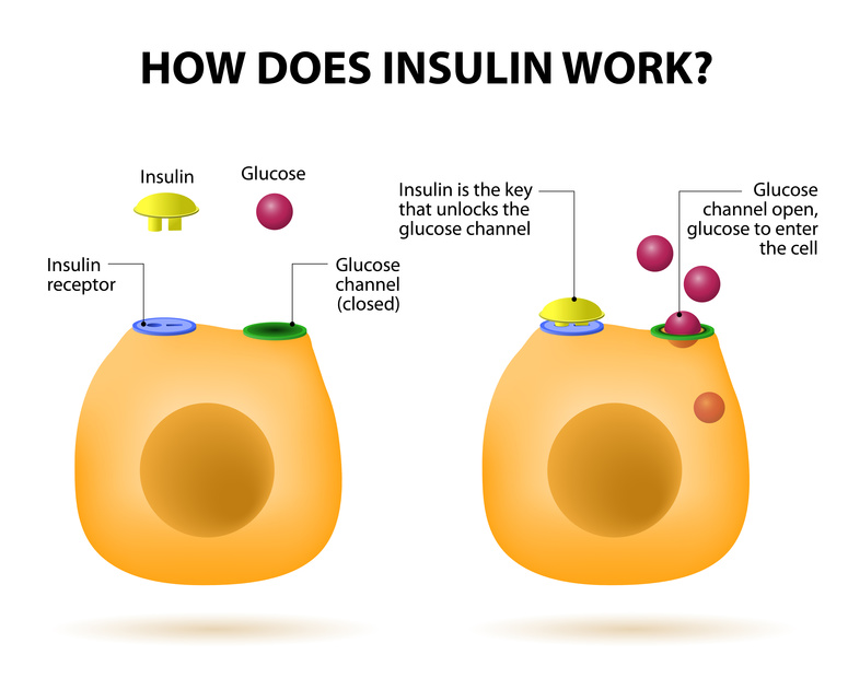 Insulin Definition